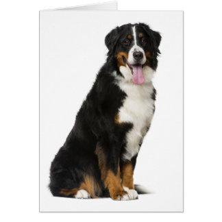 Bernese Mountain Dog Puppy Dog - Blank Card
