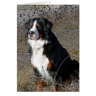 Bernese Mountain Dog Puppy Dog Note Card