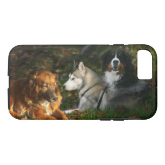 Bernese Mountain Dog, Siberian Husky Belgian Shep iPhone 8/7 Case
