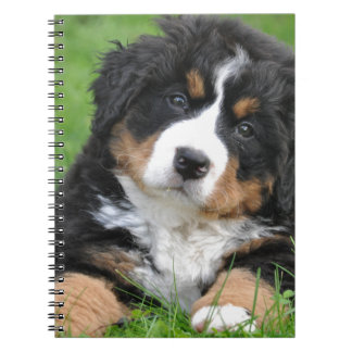 Bernese Mountain Dog Spiral Notebooks
