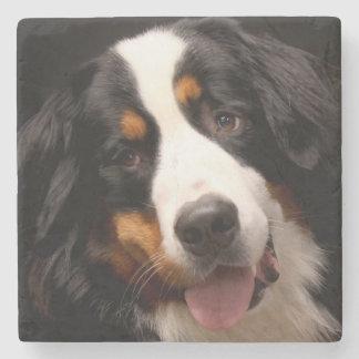 Bernese Mountain Dog Stone Coaster