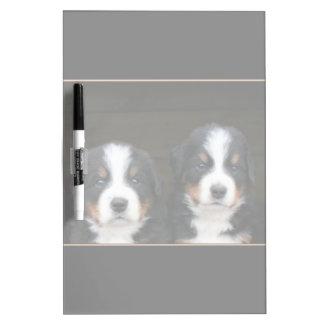 Bernese mountain dogs dry erase board