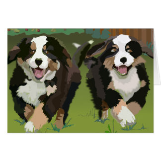 Bernese Mountain Dogs notecards Card