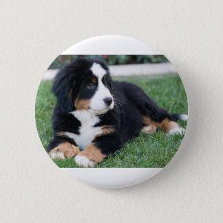 Bernese Mountain Puppy 2 Inch Round Button