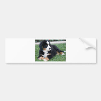 Bernese Mountain Puppy Bumper Sticker