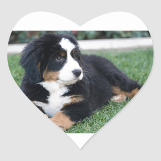 Bernese Mountain Puppy Heart Sticker