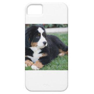 Bernese Mountain Puppy iPhone 5 Case
