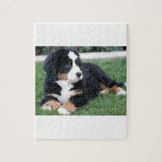 Bernese Mountain Puppy Jigsaw Puzzle