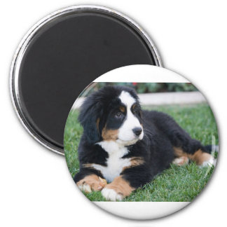 Bernese Mountain Puppy Magnet