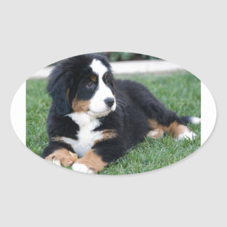 Bernese Mountain Puppy Oval Sticker