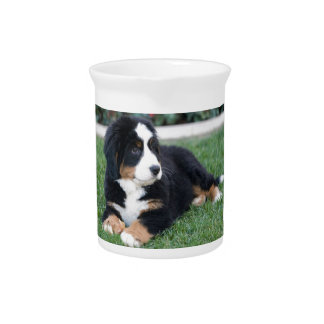 Bernese Mountain Puppy Pitcher