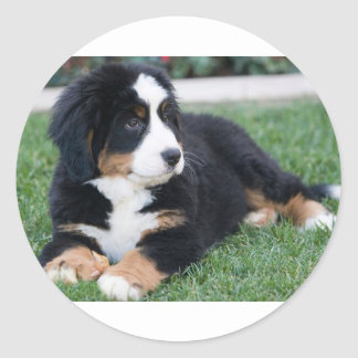 Bernese Mountain Puppy Round Sticker