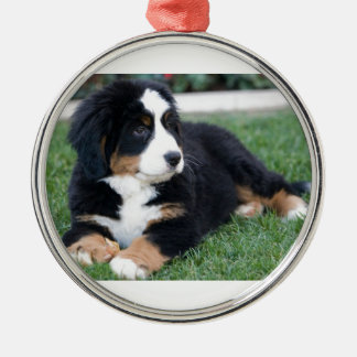 Bernese Mountain Puppy Silver-Colored Round Ornament