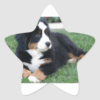 Bernese Mountain Puppy Star Sticker