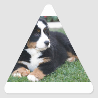 Bernese Mountain Puppy Triangle Sticker