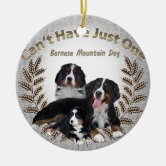 Bernese Mt. Dog Can't Have Just One Ornament