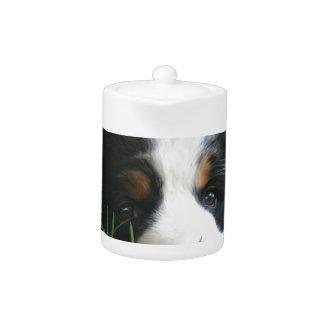 Bernese Puppy