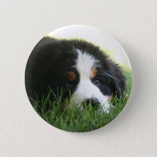 Bernese Puppy 2 Inch Round Button