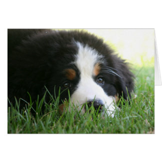 Bernese Puppy Card