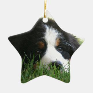 Bernese Puppy Ceramic Star Ornament