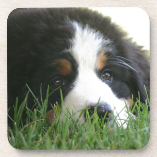 Bernese Puppy Coaster