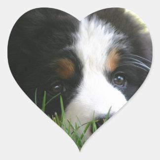 Bernese Puppy Heart Sticker