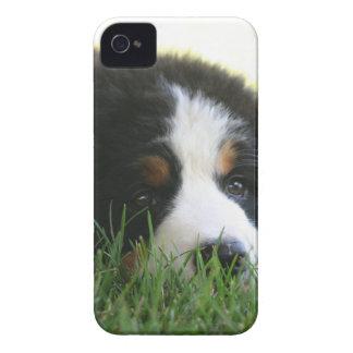 Bernese Puppy iPhone 4 Case-Mate Case