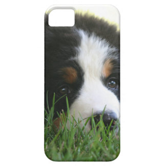 Bernese Puppy iPhone 5 Covers