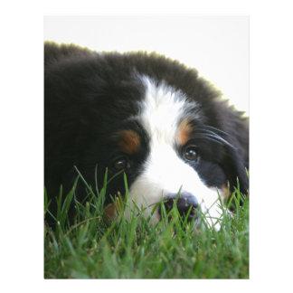 Bernese Puppy Letterhead