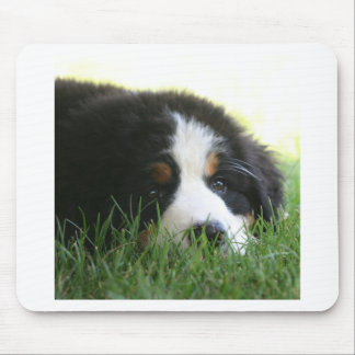 Bernese Puppy Mouse Pad