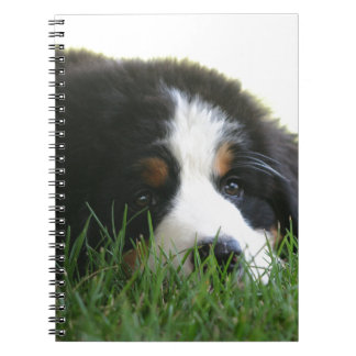 Bernese Puppy Note Books