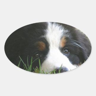 Bernese Puppy Oval Sticker