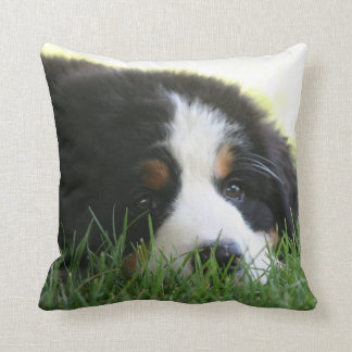 Bernese Puppy Pillow