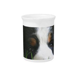 Bernese Puppy Pitcher