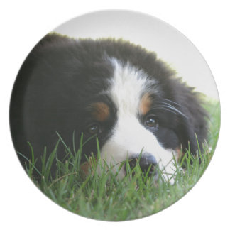 Bernese Puppy Plate