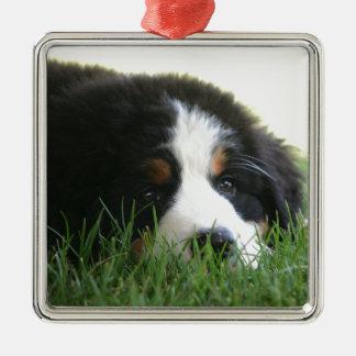 Bernese Puppy Silver-Colored Square Ornament