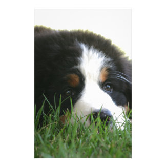 Bernese Puppy Stationery