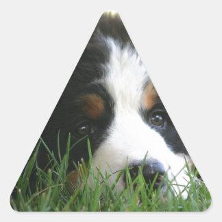 Bernese Puppy Triangle Sticker