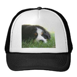 Bernese Puppy Trucker Hat