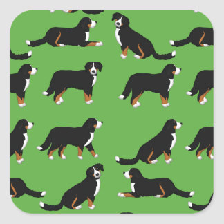 Bernese Sennenhund selection Square Sticker
