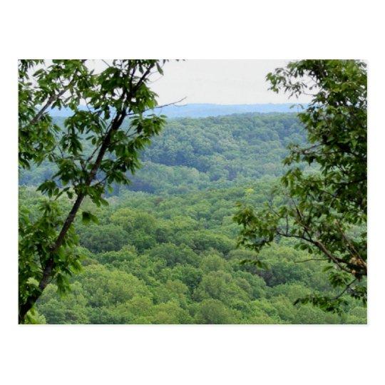 Bernheim Forest Postcard