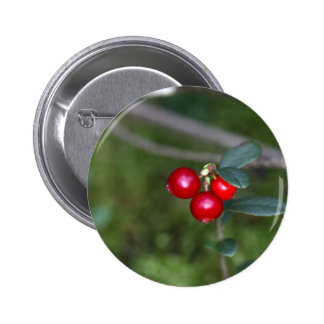 Berries of a wild lingonberry (Vaccinium vitis-ide 2 Inch Round Button