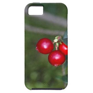 Berries of a wild lingonberry (Vaccinium vitis-ide iPhone 5 Cases