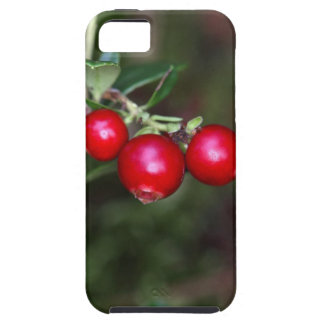 Berries of a wild lingonberry (Vaccinium vitis-ide iPhone 5 Covers