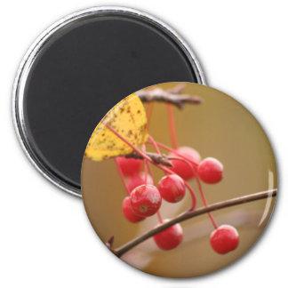 Berry Golden magnet