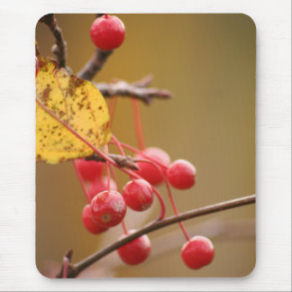 Berry Golden mousepad