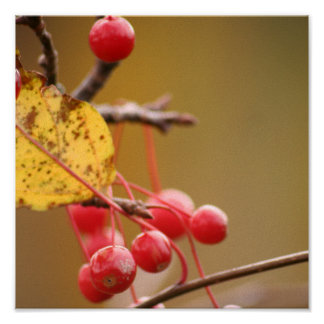 Berry Golden print