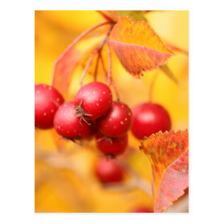Berry Nice postcard