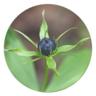 Berry of an herb paris (Paris quadrifolia) Party Plates
