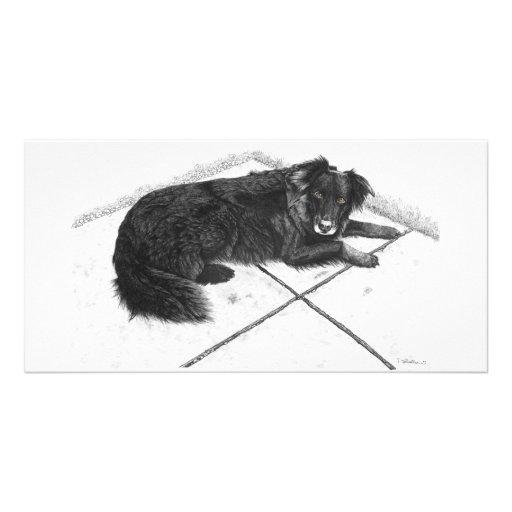 Bess, Boarder Collie - Photo Card